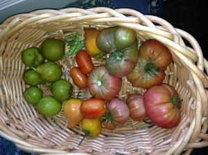A gratuitous exhibition of late season heirloom tomatoes from the author's garden.