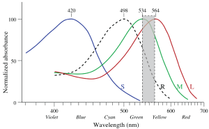 The strategy used by the EnChroma engineers is to remove a chunk of wavelengths that could not possibly be distinguished by deuteranomalous M and normal L cones.