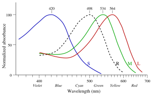 This graph from Wikipedia shows the absorbance spectra of the three types of cone photoreceptors that humans possess.