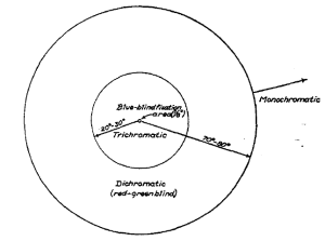 This diagram shows the different chromatic competencies in four areas of the retina (fovea, out to 20-30 degrees, out to 80 degrees and then the extreme periphery). In the fovea there are no S cones. In the inner 30 degrees (and outside the fovea) all 3 cone types are present. Stimulation in an annulus outside of that does not lead to trichromatic color perception but supports color perception similar to that of color blind individuals.Light that hits the far periphery does not result in color perception.