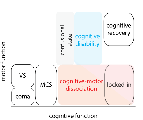Disorders of consciousness depend critically on cognitive and motor functional abilities. This scheme is adapted from Schiff 2015 (JAMA Neurology 72:1413).